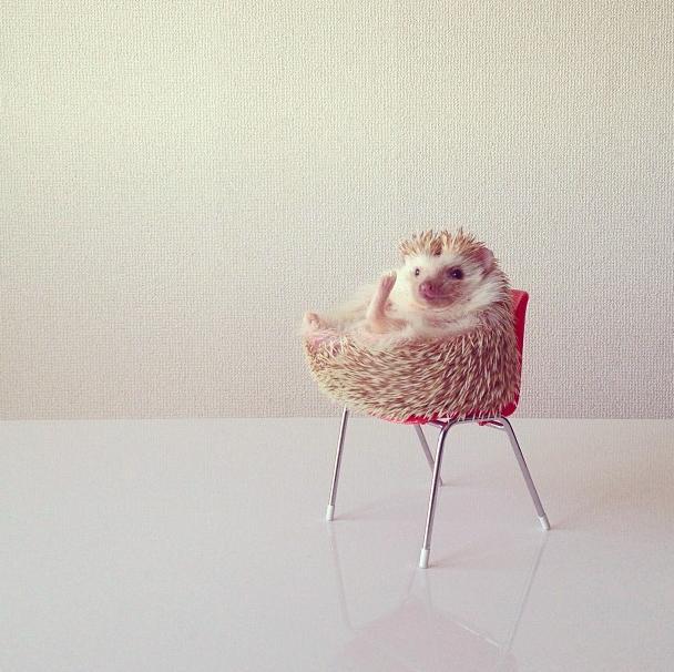 mrwonderful_darcy_the_flying_hedgehog_erizo_021