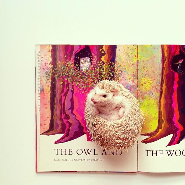 mrwonderful_darcy_the_flying_hedgehog_erizo_029