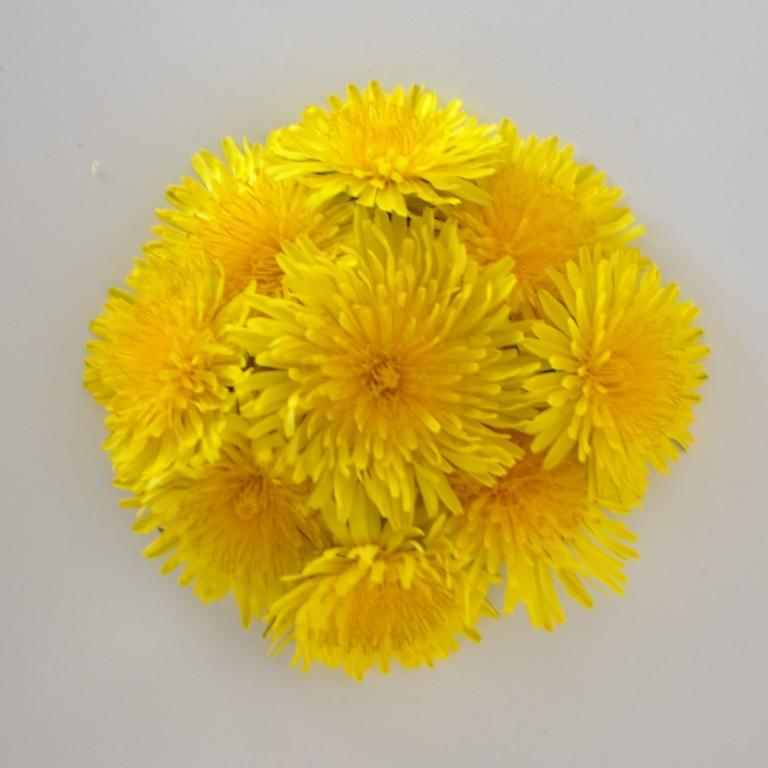 ¿A quién seguir en instagram? nininoes, una artistaza con las flores