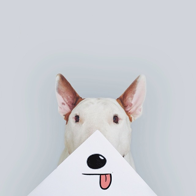 jimmy-choo-bull-terrier-illustrations-rafael-mantesso-6