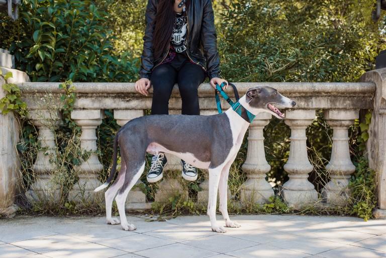 Tu perro quiere ser tan estiloso como tú