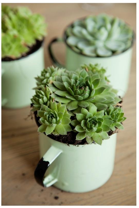 Succulents (1)
