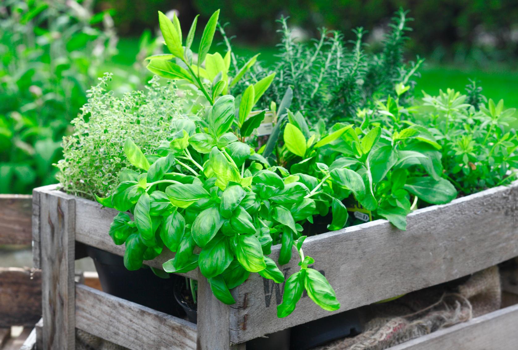 Planta en tu propio huerto urbano y a comer sano muymolon - Plantas de huerto ...