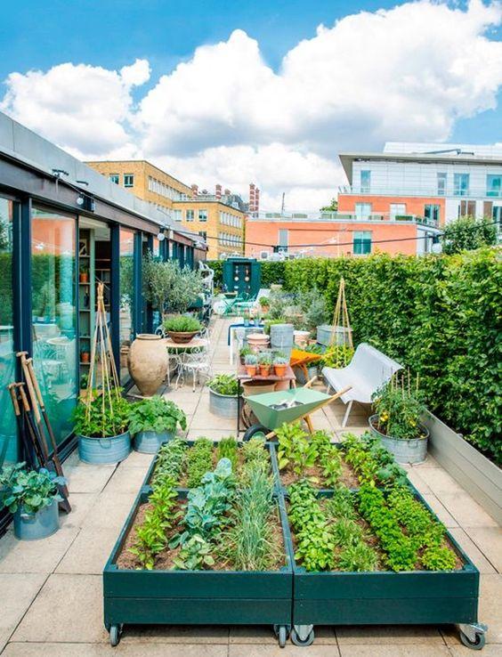 Planta en tu propio huerto urbano y a comer sano muymolon - Huerto urbano balcon ...