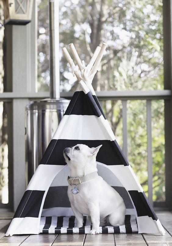 Accesorios rebonitos para las mascotas de la casa ¡meow!