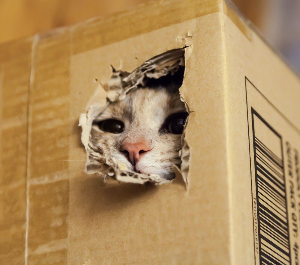 gatos-rascadores-hacer-carton