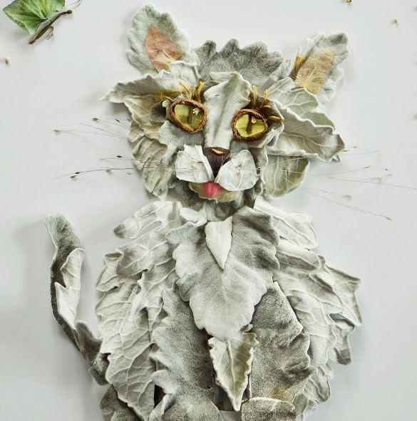 gato_4