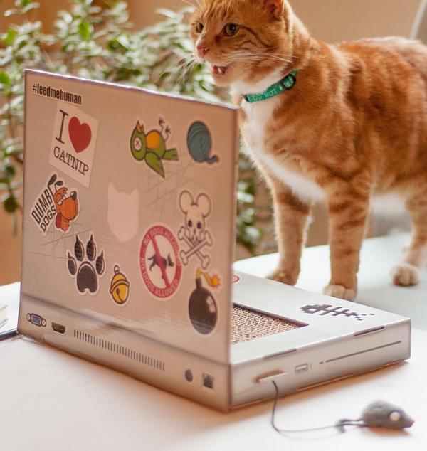 mascotas y accesorios