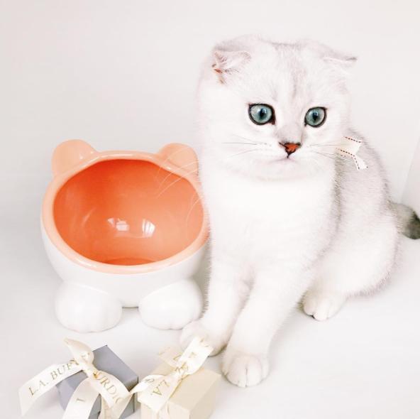 accesorios gatos